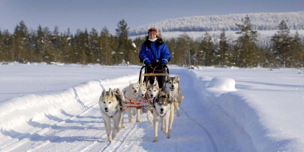 escursione in slitta trainata da husky