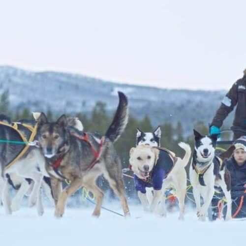 tour in slitta trainata da husky norvegia