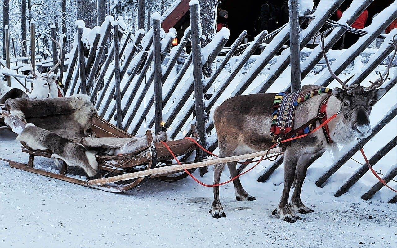 Slitta di Babbo Natale con la Renna